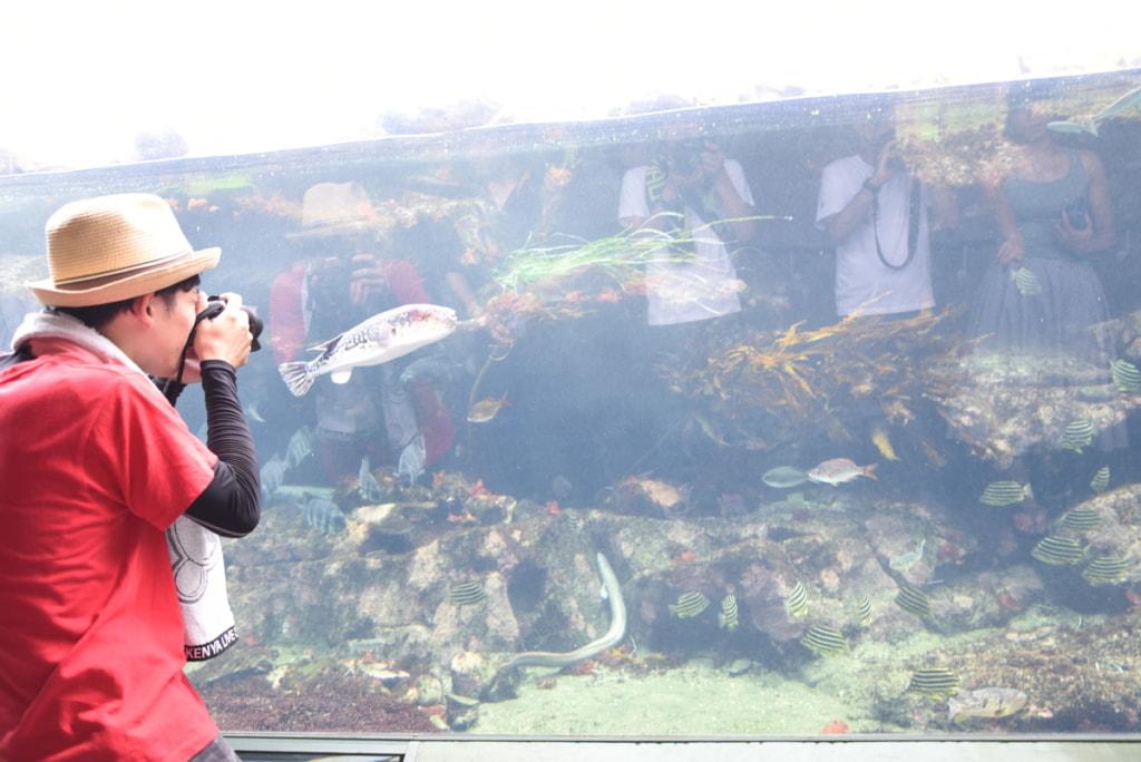 ガルパン聖地 アクアワールド茨城県大洗水族館